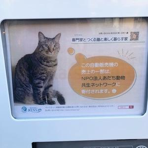 猫と楽しく暮らす家