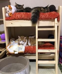 猫用二段ベッド