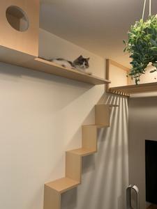 猫と暮らすリビング