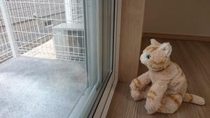 猫が中庭を眺める