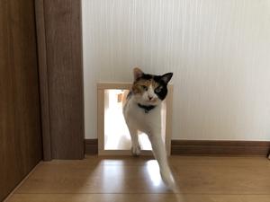 猫の通り抜けドア
